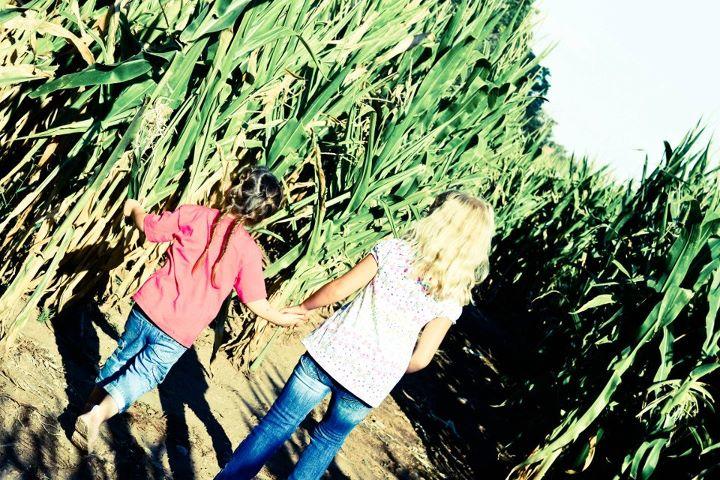 Denver Botanic Gardens Corn Maze At Chatfield But I Want