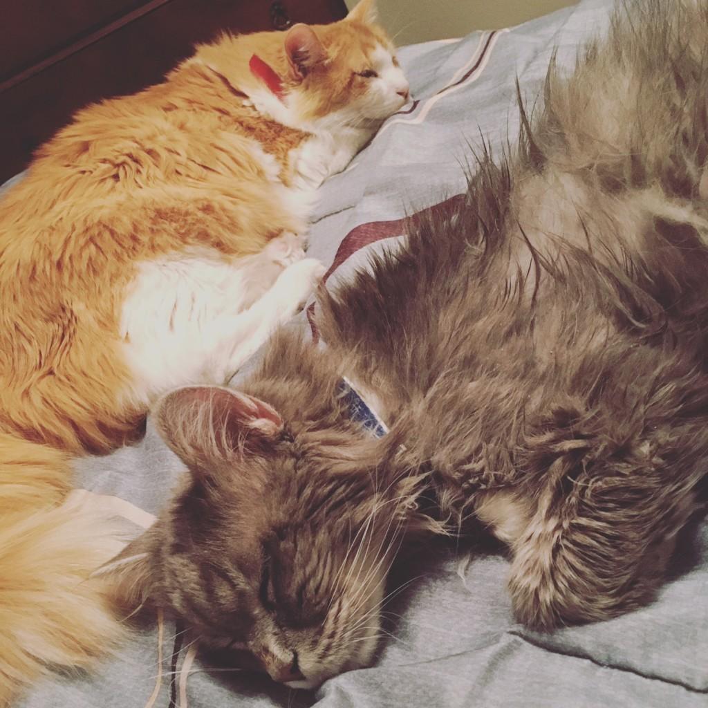 meow mix cats